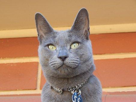 Portrait, Cat, Cute, Animal, Pet, Fur, Domestic, Young