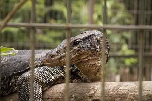Varan, Reptile, Cage, The Zoo