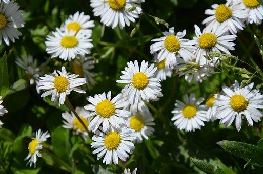 Flower, Nature, Flora, Summer, Floral, Garden, Grass