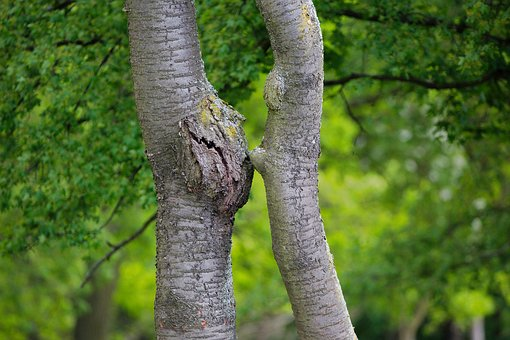 Nature, Tree, Wood, Plant, Leaf, Summer, Tribe