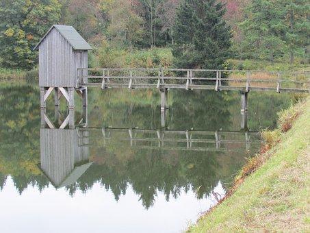 Nature, Wood, Waters, Tree, Grass, Mirroring, Lake