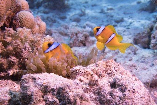 Underwater, Ocean, Coral, Fish, Water, Wildlife, Diving