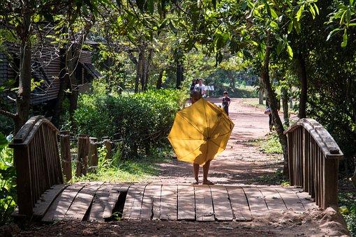 Wood, Tree, Nature, Travel, Garden, Asia, Parasol