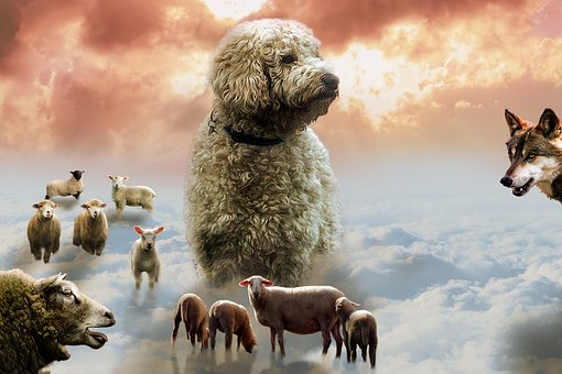 Mammal, Animal, Nature, Dog, Goldendoodle