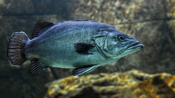 Fish, Swim, Water, Animal, Marine, Rock