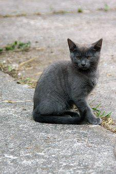 Animal, Mammal, Cat, Nature, Cute, Animal World, Fur