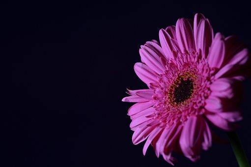 Flower, Nature, Summer, Gift, Floral, Spring, Bello