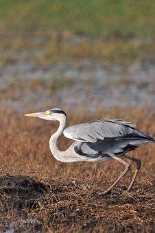 Bird, Wildlife, Nature, Animal, Feather, Outdoors, Beak