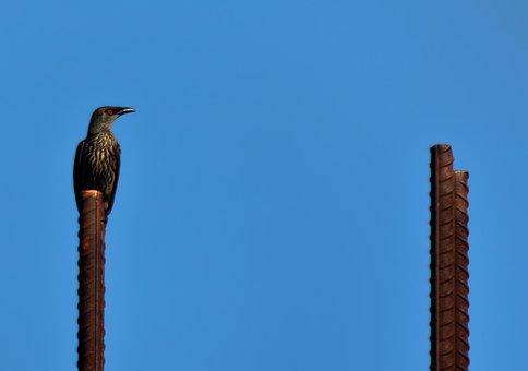 Sky, Outdoors, Nature, Bird, Starling, Natural, Wild