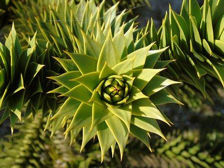 Flora, Nature, Leaf, Growth, Tropical, Botanical