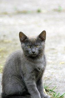 Animal, Mammal, Cute, Cat, Nature, Grey, Animal World