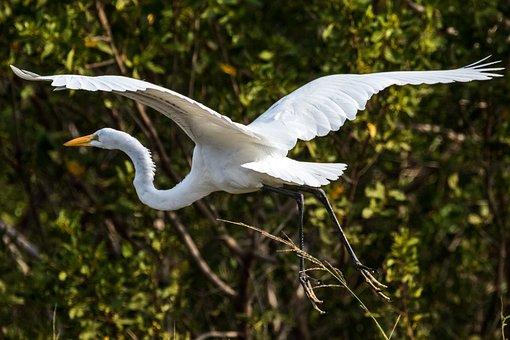 Cuba, Cayo Santa Maria, Garzón, Birding, Nature