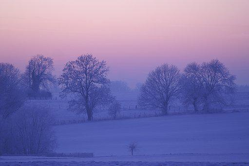 Winter, Dawn, Tree, Fog, Nature, Cold, Snow, Freeze