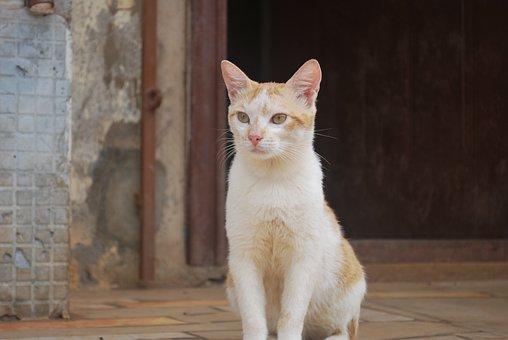 Animal, Cat, Cute, Domestic, Portrait, Fur, Eye, Sit