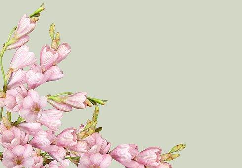 Greeting Card, Flower, Nature, Flora, Leaf, Garden