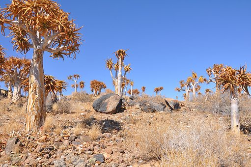 Nature, Dry, Tree, Desert, Flora, Plant, Sky, Natural
