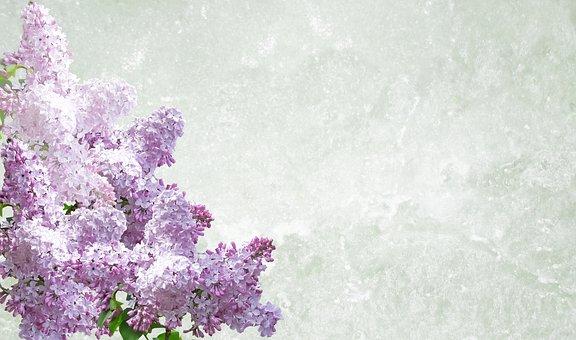 Greeting Card, Lilac, Desktop, Flower, Nature, Season