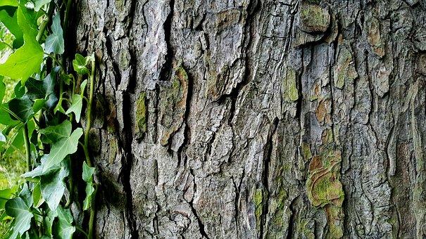 Tree, Bark, Ivy, Nature, Background, Wood, Tribe