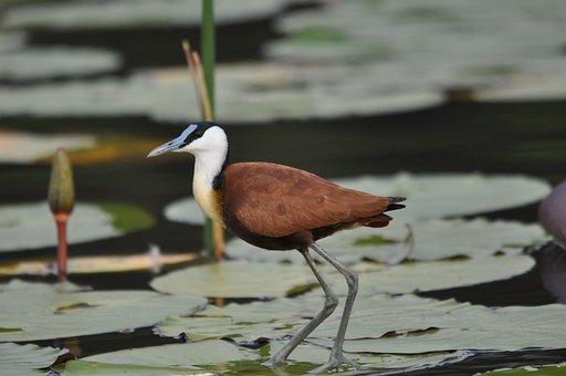Bird, Wildlife, Pool, Water, Lake, Outdoors, Nature