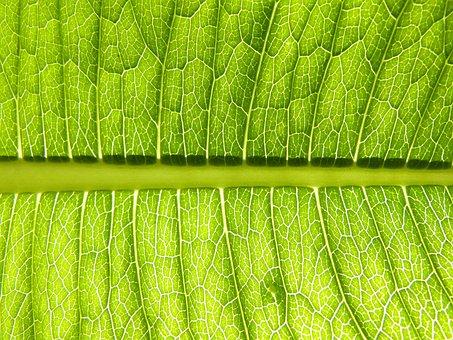Leaf, Plant, Vein, Environment