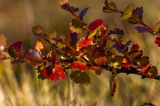 Plant, Leaves, Foliage, Fall, Autumn, Colorful, Flora