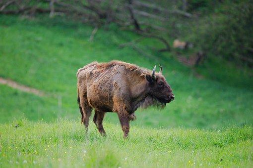 Grass, Mammal, Animal, Meadow, Nature, Animal World