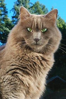 Cute, Animal, Portrait, Cat, Nature, Mammal, Feline