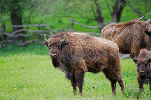 Animal, Grass, Mammal, Nature, Animal World, Meadow