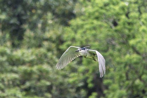 Nature, Bird, Wildlife, Outdoors, Wing, Animal, Wild