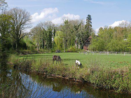 Pasture, Coupling, Old Farm, Horse Attitude, Waters