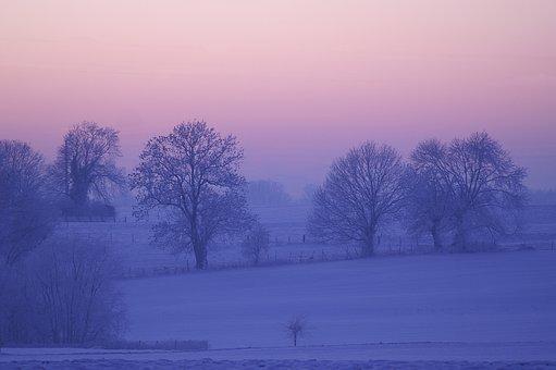 Winter, Dawn, Tree, Fog, Nature, Cold, Snow, Freeze