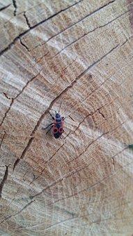 Nature, Wood, Insect, Pyrrhocoris, Spring