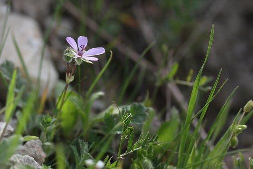 Flower, Pink, Wild, Spring, Supplies, Beauty, Petals