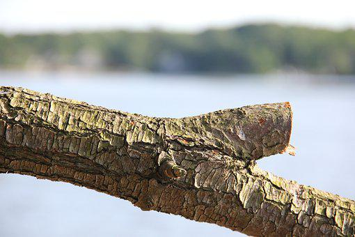Nature, Outdoors, Tree, Wood, Trunk, Bark, Waterview