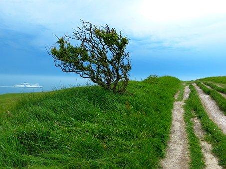 Away, Path, Hiking, Trail, Nature, Water, Sea, Tree