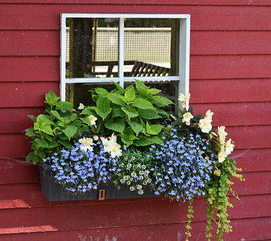 Window, Flowers, Floral Decorations, By Looking
