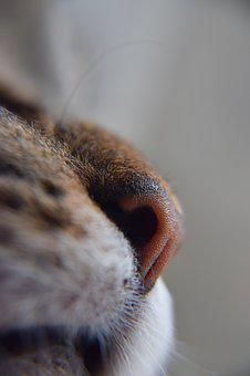 Cat, Veterinarian, Cats Nose, Smell, Smelling, Senses