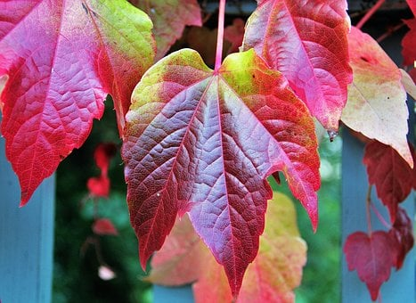 Fall Leaves, Autumn Colours, Colors Of Autumn