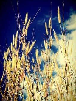 Field, Filter, Flora, Flower, Foliage, Garden, Images