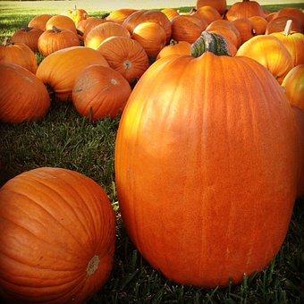 Pumpkin, Patch, Autumn, Halloween, Garden, Kid
