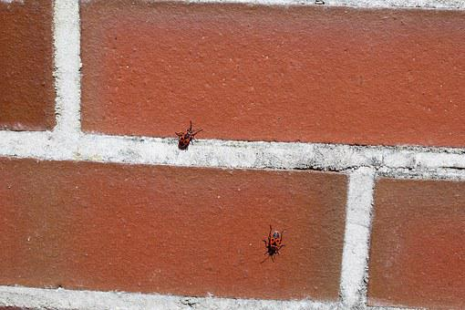 Fire Bug, Animal, Wall, Insect, Insect Photo, Nature