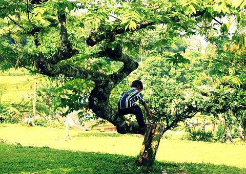 Kid, Tree, Play, Climbing, Outside, Imaginative, Alone