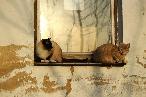 Cat, Window, Autumn Sun, Weathered, Wall, Lime Plaster