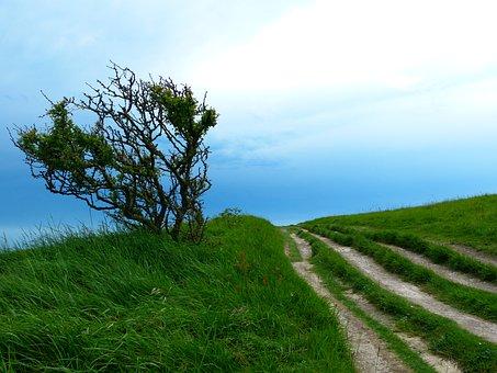 Away, Path, Hiking, Trail, Nature, Tree, Bush, Crooked