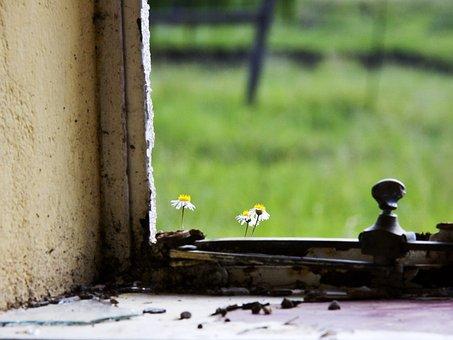 Fragile, Flower, Sill, Window, Small, Nature, Fragility