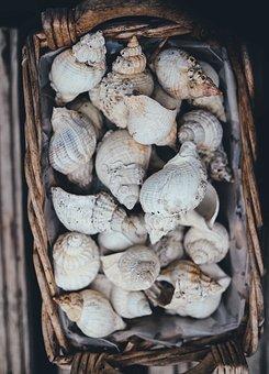 Seashells, Basket, Shell, Collection, Decor, Wicker