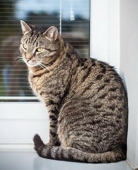 Cat, Kitten, Animal, Pet, Tomcat, Tabby, Bury, Sitting