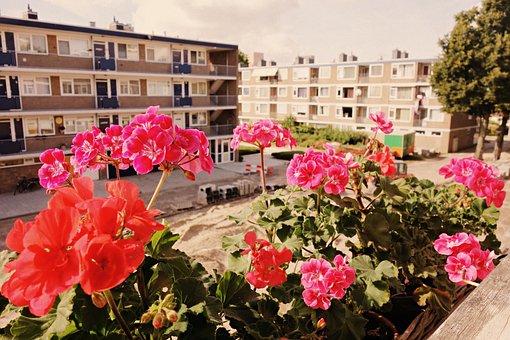 Flowers, Geranium, Sill, Window, View, Block, Urban
