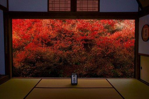 Autumn, Autumnal Leaves, Azalea, Red, Window Display