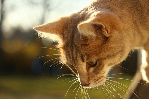 Cat, Mackerel, Window, Autumn, Weathered, Lime Plaster